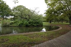 Yoyogi park (clvs7) Tags: yoyogipark japan