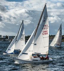 Folkboat in race mode (tonyguest) Tags: folkboat folkbåt sailing boat yacht racing water karlshamn sweden tonyguest swe1288 swe1274 swe274 karlshamnssegelsällskap kss kvällskapsegling blekinge