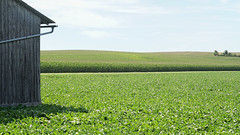 Scenes from Lower Bavaria 79 (Bernd Walz) Tags: field fields fieldscape landscape rural countryside agriculture transformedlandscape artificiallandscape bavaria lowerbavaria emptiness space