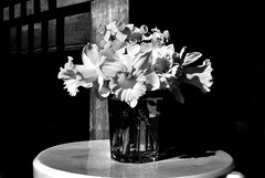 Spring (stephen trinder) Tags: stephentrinder stephentrinderphotography aotearoa godzone kiwi christchurch christchurchnewzealand nz newzealand flowers daffs daffodils monochrome blackandwhite spring vase shadows sunlight bright bloms interior balance harmony