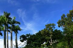 L1350256 Serenity Garden (Rise Liao) Tags: 公園 藍天白雲 樹木 花園