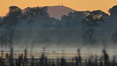 Mount Warrenheip (blachswan) Tags: wetland wetlands mullahwallahwetlands mullahwallah winterswamp swamp ballarat victoria australia mountwarrenheip water fog
