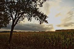 Wilder Wetterwechsel (Rolf Pahnhenrich) Tags: rolfpahnhenrich canoneos5dmarkii landschaft wind sonnenlicht feld ostwestfalen licht wolkenlandschaft hdr wetterumschwung fotoexperiment abendhimmel