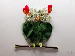 gufo (Antonio Iacobelli (Jacobson-2012)) Tags: owl gufo bird flower bari fujifilm gfx50r