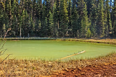 Paint Pot Pond (http://fineartamerica.com/profiles/robert-bales.ht) Tags: canada forupload lake paintpot places projects scenic toworkon fgeothermal landscape mud thermal mountain national hot pot steam nature geology pool tourism beautiful geyser basin bubble mineral water tourist visitor mudpool icelandic volcanic boiling landmark sulfuric sulphur surreal dramatic bubbling sulfur mudpot geothermalarea vulcanic kootenaynationalpark red trail colorful milky slit glacial vermilionriver emerald paintpots green robertbales