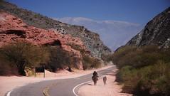 Argentina (paolomilanese) Tags: road horses argentina rocks desert noa gaucho cafayate caballos cowboy cavalli caballeros animals animali