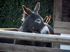 DSCN9596 (Gianluigi Roda / Photographer) Tags: summer july 2013 countryside farmhouse donkeys