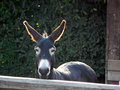 DSCN9591 (Gianluigi Roda / Photographer) Tags: summer july 2013 countryside farmhouse donkeys