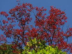 IMG_6997 (belight7) Tags: memorial garden tree colors uk england stoke poges stokepoges