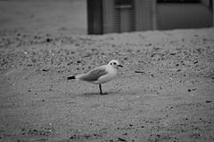 IMG_0964 (ohnekussinsbett) Tags: cuxhaven nordsee wattenmeer strand elbe sturm
