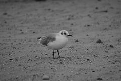 IMG_0981 (ohnekussinsbett) Tags: cuxhaven nordsee wattenmeer strand elbe sturm