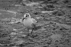 IMG_0976 (ohnekussinsbett) Tags: cuxhaven nordsee wattenmeer strand elbe sturm