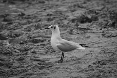 IMG_0975 (ohnekussinsbett) Tags: cuxhaven nordsee wattenmeer strand elbe sturm