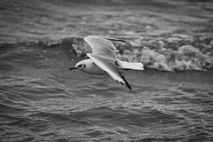 IMG_0973 (ohnekussinsbett) Tags: cuxhaven nordsee wattenmeer strand elbe sturm