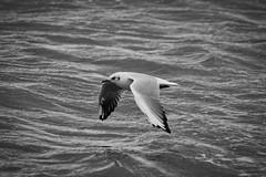IMG_0972 (ohnekussinsbett) Tags: cuxhaven nordsee wattenmeer strand elbe sturm