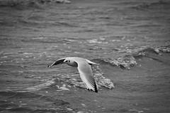 IMG_0971 (ohnekussinsbett) Tags: cuxhaven nordsee wattenmeer strand elbe sturm