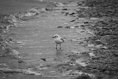 IMG_0969 (ohnekussinsbett) Tags: cuxhaven nordsee wattenmeer strand elbe sturm