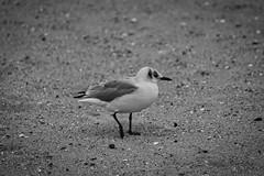 IMG_0966 (ohnekussinsbett) Tags: cuxhaven nordsee wattenmeer strand elbe sturm