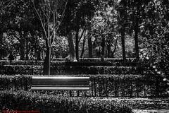 OVEREXPOSED DETAIL PARQUE  DEL BUÉN RETIRO-Madrid (FRANCISCO DE BORJA SÁNCHEZ OSSORIO) Tags: bokeh beauty belleza blackandwhite blancoynegro bw passion photo pasión primavera photostreet park parquedelretiro parquedelbuenretiro españa exposure enfoque encuadre madrid moment nature naturaleza nice color colour composition composición colourtemperature spring shot summer streetphoto street detalle detalles detail details desenfoque disparo divertido delicado delicate dof love light luz life lovely amor arrow autumn otoño instant instante invierno winter verano vida flechazo focuspoint focus foco framing