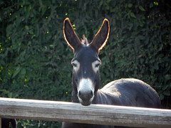DSCN9592 (Gianluigi Roda / Photographer) Tags: summer july 2013 countryside farmhouse donkeys