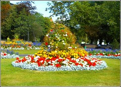 City Centre Floral Display ... (** Janets Photos **) Tags: uk hull eastyorkshire citycentres gardens flowerdisplays publicgardens flora plants colours