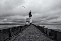 Fisherman's Blues (sdupimages) Tags: seagull mouette clouds nuages sky sea mer phare lighthouse blackwhite noirblanc noiretblanc bw nb monochrome dramatic seascape landscape paysage fisherman pecheur