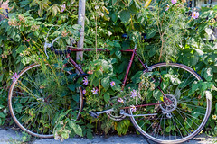 Canon 5D;Flowers & Bike (Uta_kv) Tags: beautifulwoman canon5d canon5dclassic teamcanon toronto beautifulday