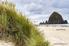 Cannon Beach (doveoggi) Tags: travel oregon coast 1146 beach haystack cannonbeach seastacks