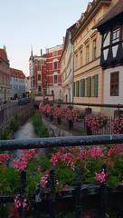 Quedlinburg (pepponzola) Tags: quedlinburg harz