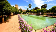Alcázar de los Reyes Cristianos (Peter.S.Roberts) Tags: interesting alcázardelosreyescristianos romancatholicdioceseofcórdobacordovaandalusia spain espania gardens water waterfeature flowers plants colours colourful fortress turrets trees leaves branches palmtrees belltower walls pathways gravel afternoon outdoor hot humid bright clouds bluesky flowerbeds fountain stone masonry architecture tower towering castle pov dof details perspective holiday vacation people petals green blue church holyground greenery shrubs bushes petersroberts peterstuartroberts nikon nikond7200 sigma wideangle landscape railings abroad europe cordoba royal