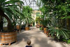 _DSC7234 (tompagenet) Tags: amsterdam botanicalgardens hortusbotanicus palmgreenhouse palmenkas palmtrees