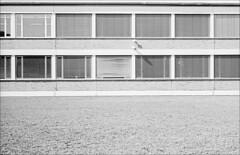 Fenster sind zum raus guggen da (fluffisch) Tags: fluffisch darmstadt bessungen leica m6 summicronm50f2 summicron 35mm f2 film analog kodak trix400 800