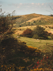 *** (Lee|Ratters) Tags: sony a7 voigtlander cv40 40mm f12 crook peak somerset rolling hills nearlyautumn colour landscape scenery countryside
