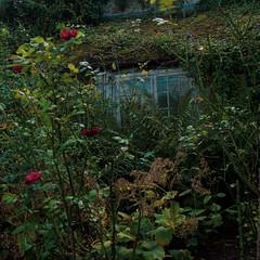 Sissinghurst Castle Gardens (davepickettphotographer) Tags: sissinghurst castle nationaltrust uk england britain vitasavillesmith haroldnicolson artist gardens gardening formal historic trust proprty kent poetic iconic world renowned garden estate beauty writer writers cottage tunbridge wells royal cranbrook