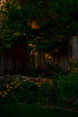 Perennial Bed in Early Light (The Good Brat) Tags: colorado us garden perennial flowerbed yard backyard morning
