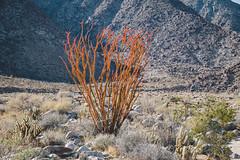 IMG_1391.jpg (jgo_mo) Tags: hike desert anzaborrego canyon mountains coloradodesert statepark rocks california adventure southwest flora slot cactus park america southerncalifornia slotcanyon usa