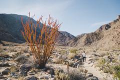 IMG_1396.jpg (jgo_mo) Tags: hike desert anzaborrego canyon mountains coloradodesert statepark rocks california adventure southwest flora slot cactus park america southerncalifornia slotcanyon usa