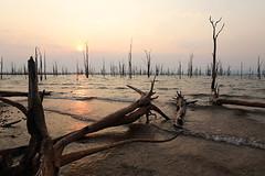 Hazy sunrise over lake Kariba - Matusadona National Park - Zimbabwe (lotusblancphotography) Tags: africa afrique zimbabwe nature trees arbres water eau reflets reflections sunrise aurore matusadona lakekariba