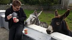 Donkey whisperer (victoria_c_barrett) Tags: ireland donkey