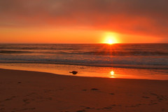 Californian sunset (Alex Borst) Tags: amerika america usa moss landing californië california strand beach zonsondergang sunset zon sun soleil coucherdusoleil sonne sonnenuntergang