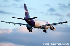 AFW (zfwaviation) Tags: kafw afw alliance fedex airbus a310 airplane