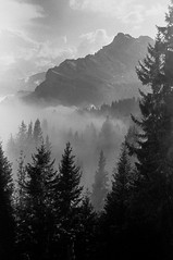 Braunwald (pinterpi) Tags: analog analogue analoguevibes landscape leica leicam6 blackandwhite blackandwhiteisworththefight black white fuji fujifilm neopan iso400 summicron hiking mountain forest ishootfilm filmisnotdead 35mm