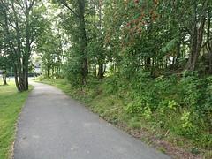 Bike Path (mtbboy1993) Tags: askim bikepath cyclefootpath indreøstfold østfold norge norway trees skog forest sykkelvei sykkelsti asphalt