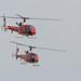 Gazelle Squadron-9