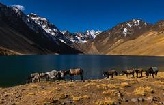 Bolivia - Cordillera Real trek (happy.apple) Tags: departamentoautónomodelapaz bolivia mountains snow lake donkey