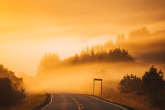 Norway (marinaweishaupt) Tags: norway nordland lofoten islands forest road roadtrip sunrise fog street nature landscape traveling travel outdoors trees goldenhour light sunlight morning morninglight europe