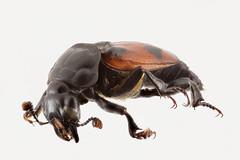 Anglų lietuvių žodynas. Žodis chemoreceptor reiškia chemoreceptorius lietuviškai.