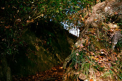 Untitled (richardhwc) Tags: asahi pentax spotmatic agfa vista400 anhui china smc takumar 35mmf35 m42 film