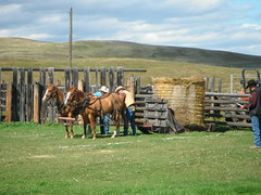 Chore Competition  Bar U Historic Ranch (Mr. Happy Face - Peace :)) Tags: historic art2019 ponies horse workhorse alberta canada cans2s sky cloud sun autumn fall ranch