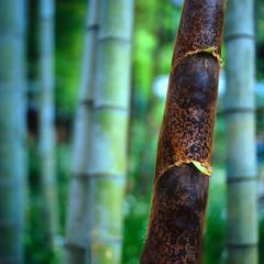 To be different (lebre.jaime) Tags: japan 日本 kamakura 鎌倉市 abstract bamboo tree analogic mediumformat film120 squareformat fujichrome fujiprovia rdp iso100 hasselblad 503cx carlzeiss planar cf2880 epson v600 affinity affinityphoto